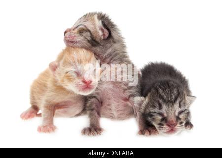Nouvelle naissance chatons mignons sur fond blanc Banque D'Images