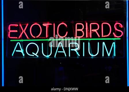 Les oiseaux exotiques néon aquarium Banque D'Images