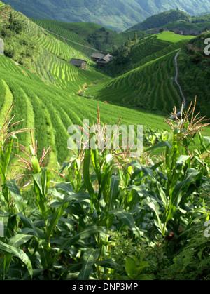 Les terrasses de riz de Longsheng (Tītián Lóngshèng) ou Dragon's backbone Rice Terraces, situé dans le comté de Longsheng, à environ 100 km Banque D'Images