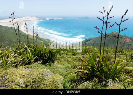 Vue le long Te Werahi Beach et Cape Maria Van Diemen, qui se trouve à 45 minutes de marche de Cape Reinga, Nouvelle Banque D'Images