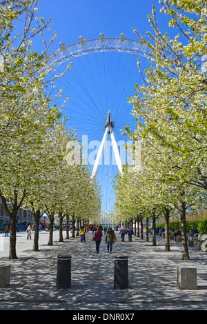 Les gens marchant sur l'avenue piétonne des arbres au printemps s'épanouissent vers la roue London Eye Ferris sur Banque D'Images