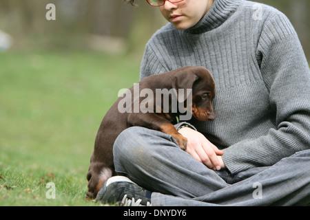 / Dobermann chien Dobermann et kid Banque D'Images
