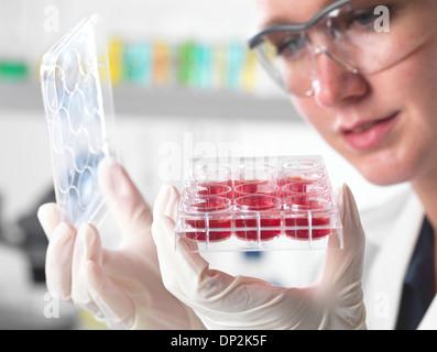 La recherche sur les cellules souches Banque D'Images