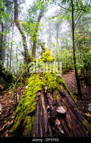 De plus en plus de mousse sur l'arbre mort dans la forêt tropicale de la Thaïlande