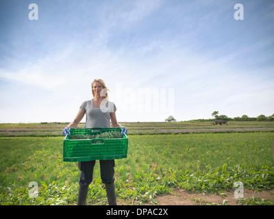 Woman carrying crate de ciboulette Banque D'Images