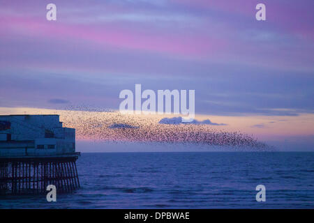 Blackpool, Lancashire, UK 11 Janvier, 2014. Murmuration exaltation: un troupeau starling oiseaux forme un seul coup acrobatique au roost sur Blackpool North Pier au crépuscule. Credit: Mar Photographics/Alamy Live News
