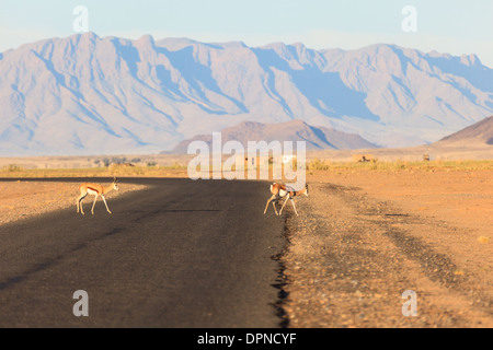 Deux antilopes oryx cross road dans le Namib-naukluft national park désert , la Namibie, montagnes en arrière-plan