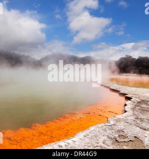 La vapeur d'eau à la piscine de Champagne, Waiotapu la Réserve Thermale, Rotorua, Nouvelle-Zélande. Banque D'Images