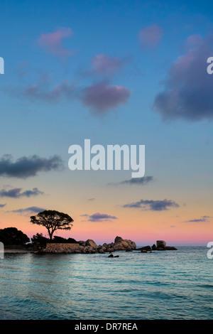 L'humeur du soir, plage de Palombaggia, Porto Vecchio, Corse-du-Sud, Corse, France Banque D'Images
