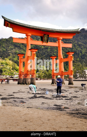 Grand torii de Miyajima à marée basse - Shikoku, Japon Banque D'Images