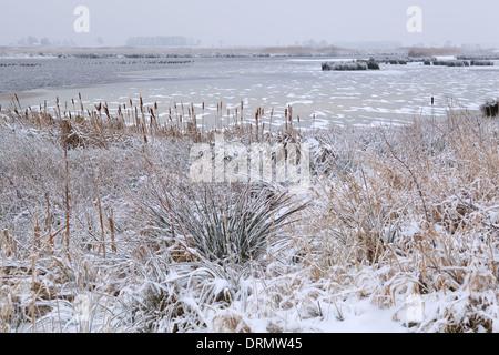 Lac gelé en hiver, Onlanden, Drenthe, Pays-Bas Banque D'Images