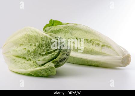 Lettuce-Lactuca,sativa romaine sur fond blanc,cut-out Banque D'Images