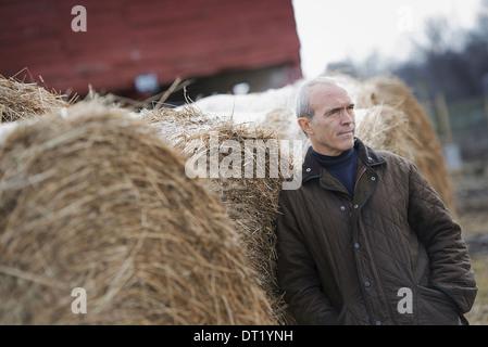 Une ferme biologique en hiver un homme debout à côté de grandes bottes de foin Banque D'Images