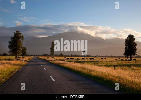 Road et de terres agricoles en fin d'après-midi la lumière, près de Fox Glacier, Alpes du Sud, l'île du Sud, Nouvelle Banque D'Images