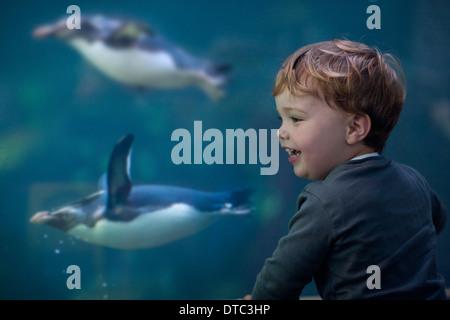 Jeune garçon profitant de pingouins nager dans l'aquarium Banque D'Images