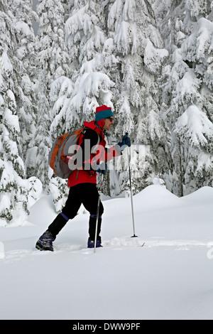 WASHINGTON - ski de fond entre les arbres couverts de neige au sommet de l'Amabilis Montagne dans la forêt nationale Banque D'Images