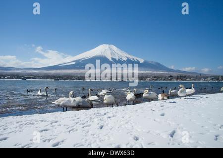 Lac Yamanaka et Mt. Fuji en hiver, Yamanashi, Japon Banque D'Images