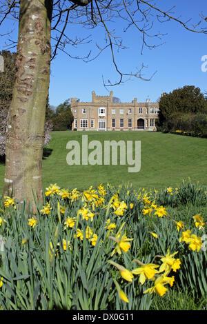 Nonsuch Park, Surrey, Angleterre, Royaume-Uni. 16 mars 2014. Les jonquilles sont en fleurs dans les jardins de Nonsuch, Banque D'Images