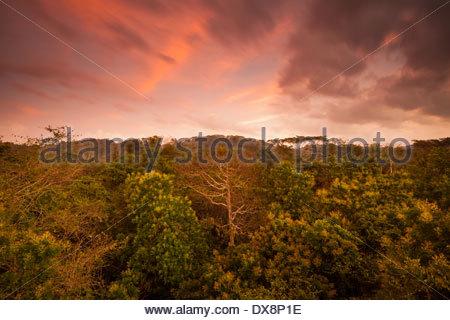 L'aube dans le parc national de Soberania, République du Panama. Banque D'Images