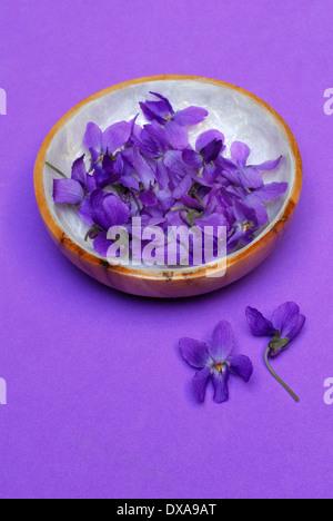 Violet doux Banque D'Images