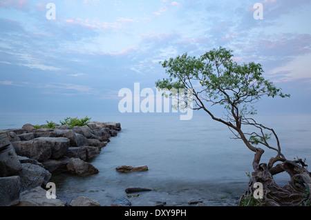 Un brise-lames et un arbre avec les racines exposées plane sur le lac Ontario à Oakville, Ontario, Canada. Banque D'Images