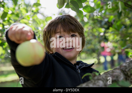 Portrait of a Boy holding up apple fraîchement cueillies Banque D'Images