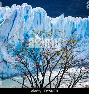 Le Glacier Perito Moreno est un glacier situé dans le Parc National Los Glaciares, dans le sud-ouest de la province Banque D'Images