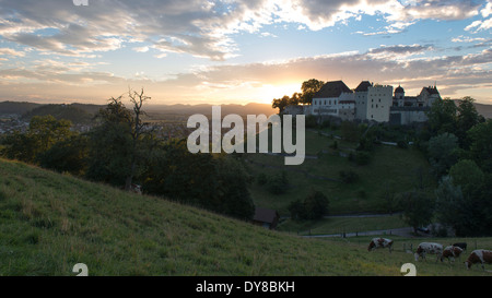 Argovie, soir, Gofi, contraste, vaches, Lenzburg, lumière, château, Suisse, Europe, Sundown, pré, nuages, dramatique Banque D'Images