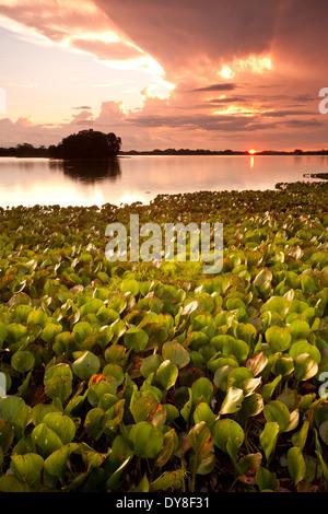 Un ciel coloré au coucher du soleil à Refugio de Vida Silvestre La Ciénaga las Macanas, Herrera province, République Banque D'Images