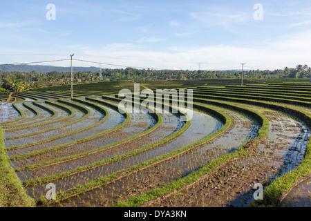 Les champs de riz dans la région de Antosari et Belimbing (probablement plus près de Antosari), Bali, Indonésie Banque D'Images