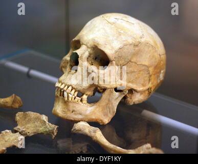 Crâne reconstruit à partir des restes d'un homme syrien âgé d'environ 45 ans. Il a été reconstruit à partir de restes Banque D'Images