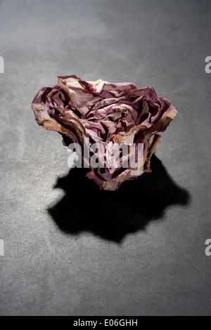 Une tête rose séché sur un fond d'ardoise Banque D'Images