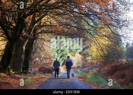 Couple de personnes âgées et chien en promenade en automne, Sidwood Forêt, Parc National de Northumberland, UK, Novembre 2013