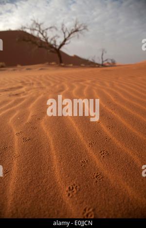 Des pistes d'animaux dans le sable des dunes de Sossusvlei, le Namib Naukluft Park, Namibie, Afrique Banque D'Images