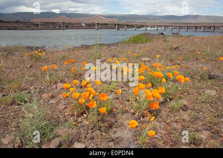 Vue sur le pont par le california les plantes indig nes de - Residence belvedere vue pont golden gate ...