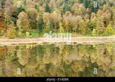 Nonnenmattweiher étang en automne, Forêt-Noire, Bade-Wurtemberg, Allemagne