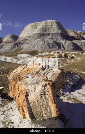 Le bois pétrifié et badlands, Blue Mesa Trail, Parc National de la Forêt Pétrifiée, Arizona USA Banque D'Images