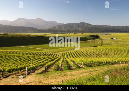 Des vignobles en bordure du lac Delta Heights Road, Renwick, près de Blenheim, région de Marlborough, île du Sud, Banque D'Images