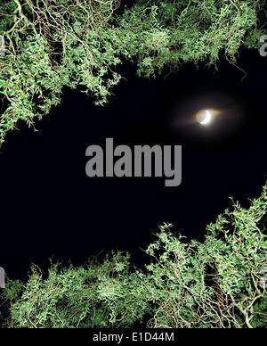 Ciel de nuit avec lune encadrée de branches bouclés Banque D'Images