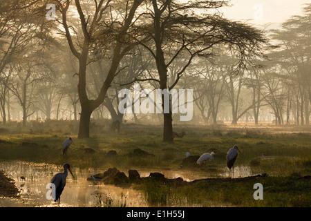Misty le lever du soleil sur les rives du lac Nakuru, Parc national du lac Nakuru, Kenya, Africa Banque D'Images