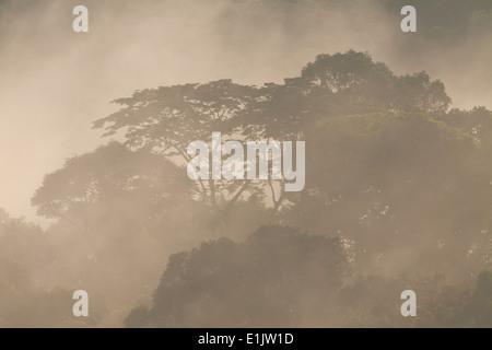 Misty rain forest à l'aube dans le parc national de Soberania, République du Panama. Banque D'Images