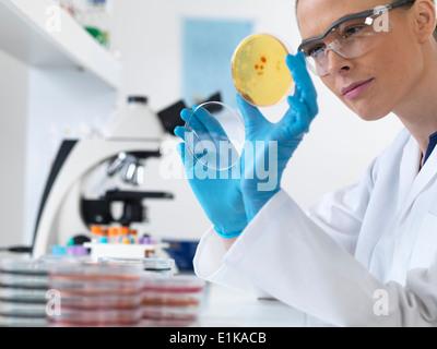 Female scientist holding petri dish avec les cultures biologiques.