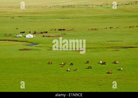 La Mongolie, province Arkhangai, Snake Valley Camp nomade, Banque D'Images