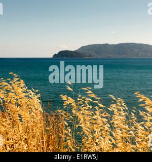 Swinging foin séché en seaside breeze Banque D'Images
