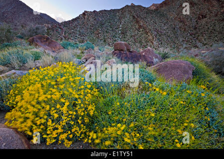 Anza-Borrego Desert State Park, Californie, USA Banque D'Images