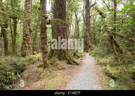 Forêt sur le lac Gunn marche dans la nature dans le Parc National de Fiordland, Nouvelle-Zélande Banque D'Images