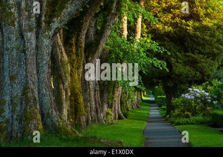 Promenade bordée d'arbres, Kerrisdale, Vancouver, British Columbia, Canada
