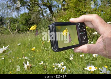 En utilisant un appareil photo compact Banque D'Images