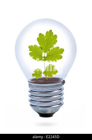 Avec des feuilles à l'intérieur de l'ampoule. Banque D'Images