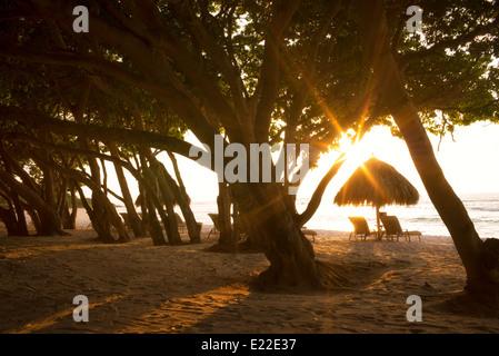 Sunburst à travers des arbres avec des chaises longues et des parasols sur la plage. Punta Mita, Mexique Banque D'Images
